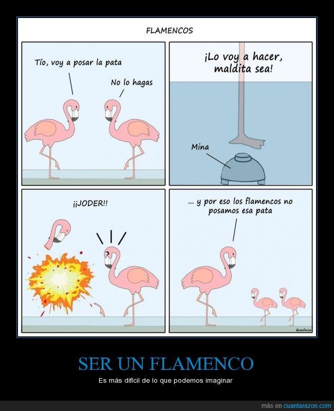 arriba,bomba,boton,costumbre,explosion,flamencos,levantar,matar,morir,pata,posar
