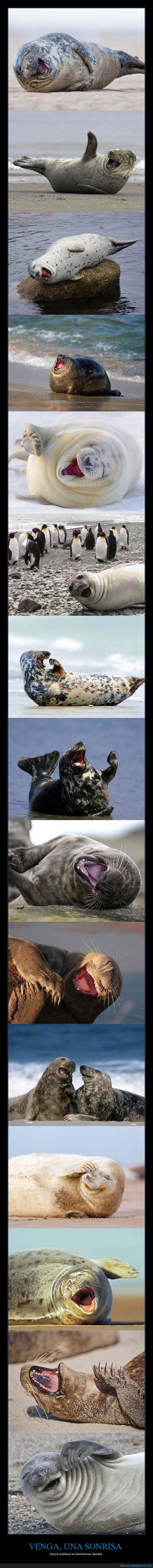 a sonreír,animal,feliz,foca,just smile,reir,risa,sonrisa