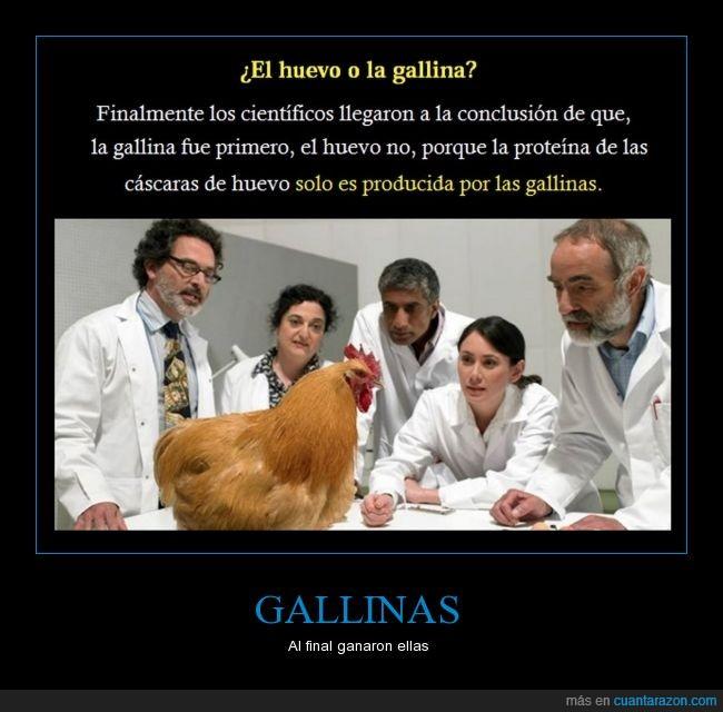 ave,cascarón,científicos,corral.blanquillo,embrión,estudios,gallina,huevo,quien primero