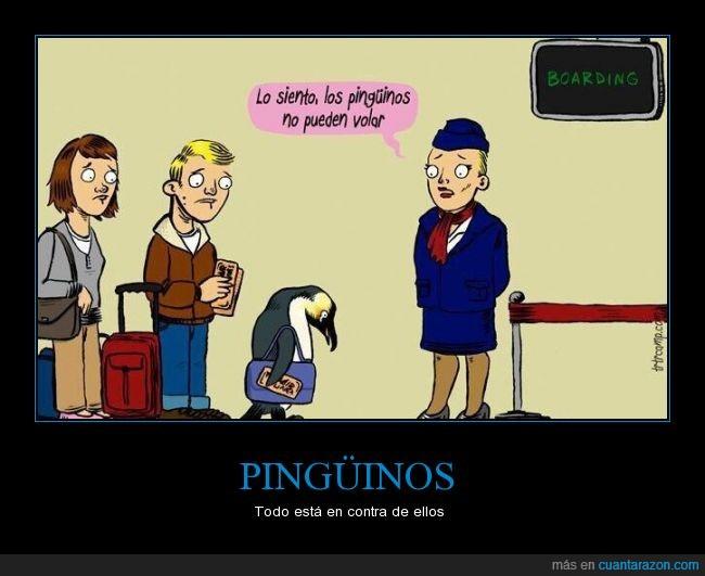aves,avion,deprimir,no,pinguinos,puede,triste,volar,vuelos