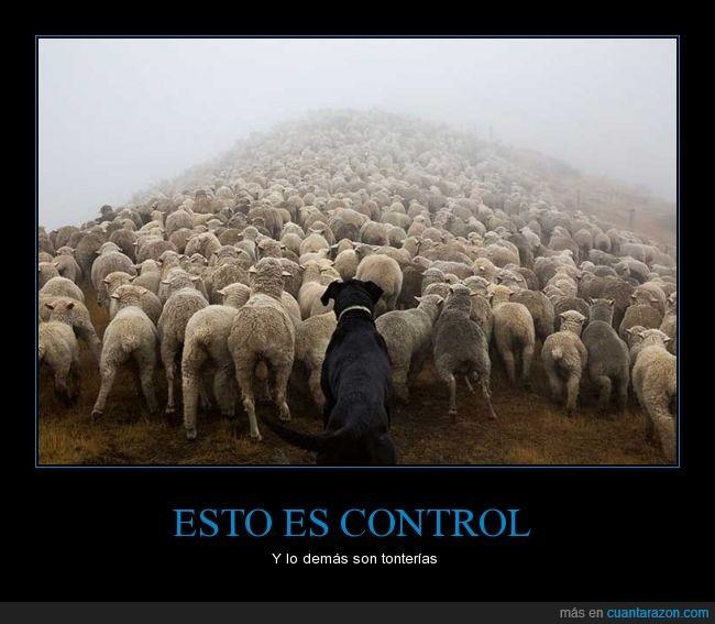 Andrew Fladeboe,can,control,fotografía,guardián,ovejas,pastor,pastoreo,perro,rebaño