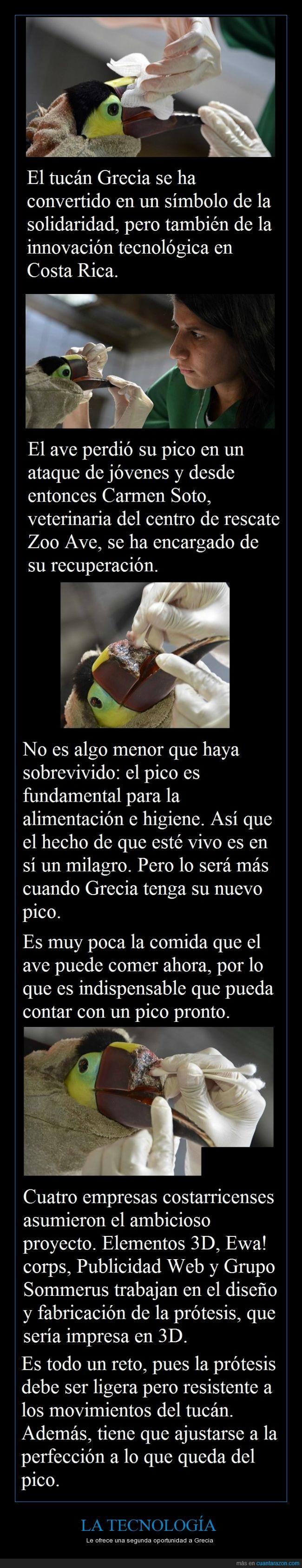 Costa Rica,gecia,impresoras 3d,protesis,que hdp quien le hizo eso al pobre animalito,segunda oportunidad,tecnologia,ticos,tucan