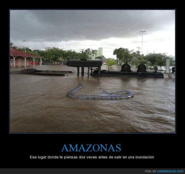 agua,Brasil,Brazil,Colombia,inundacion,lleno de culebras,peor,peor que australia,rio,terror