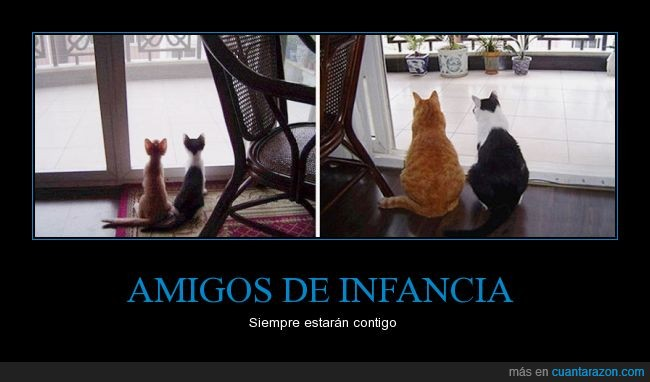 amistad,crecer,felinos,gatos,observar,par,pareja