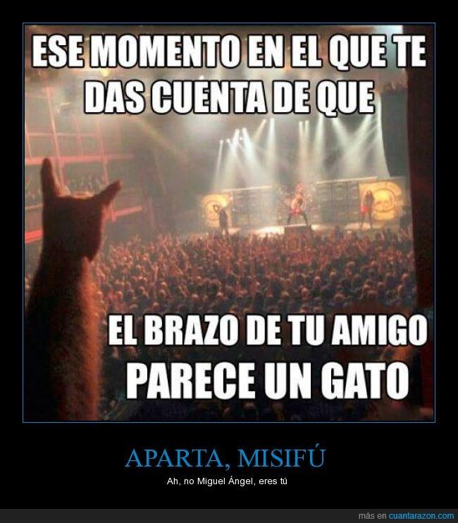 amigo,brazo,concierto,gato,pelo,peludo,rock,silueta