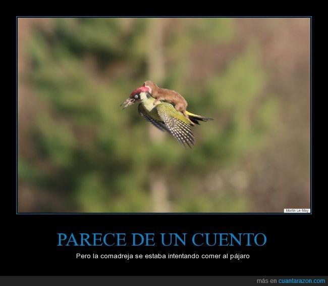 animal,ave,carpintero,comadreja,cria,encima,fotografia,naturaleza,volando,volar,wtf naturaleza