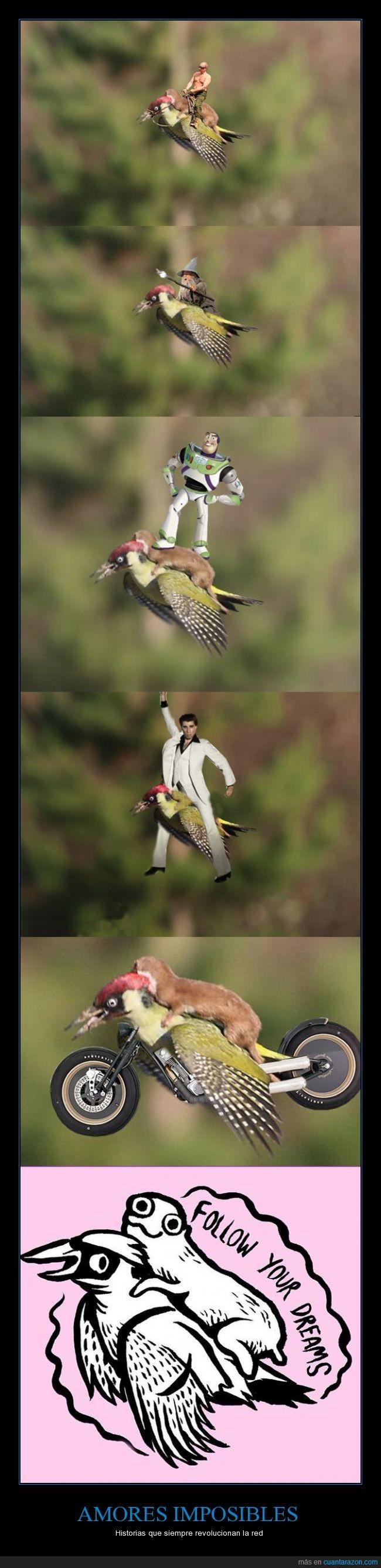 animales,chops,comadreja,curioso,divertido,humor,internet,meme,montaje,pájaro