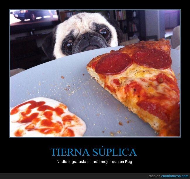 antojo,can,chantaje psicológico,comida,hambre,humor,mirada,peperoni,perro,pizza,Pug