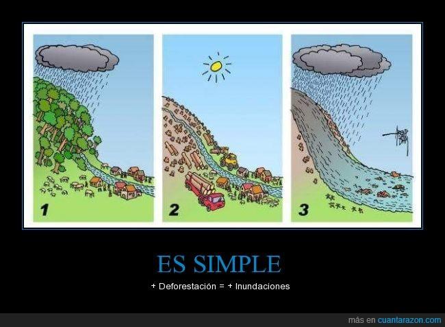 agua,arbol,bosque,deforestacion,dibujo,ilustración,inundaciones,lluvia,lluvias,parar,riada,sostenibilidad,tala