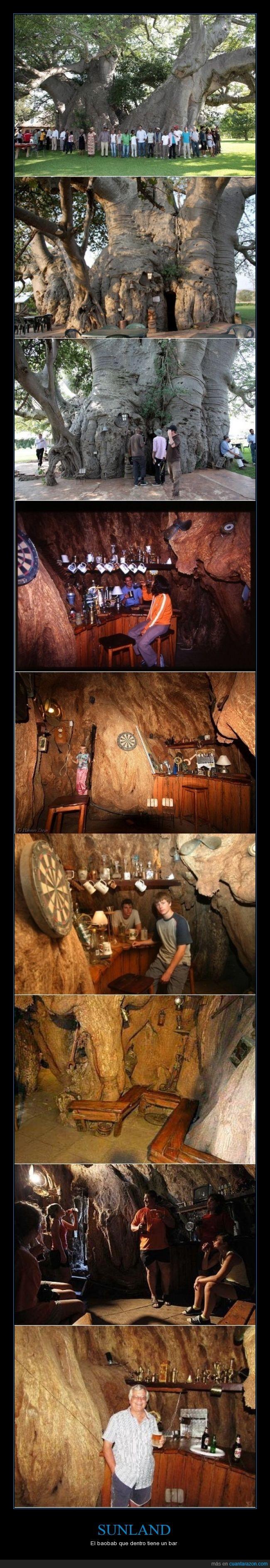 baobab,bar,beber dentro de un arbol no es cosa de todos los dias,cerveza,cool,dentro,sudáfrica,tronco,vasos