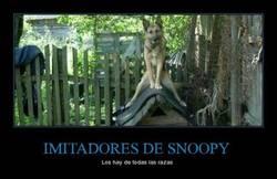 Enlace a IMITADORES DE SNOOPY
