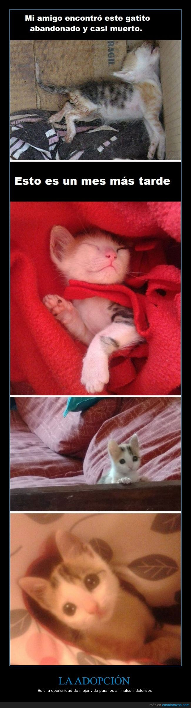 adopción,animales,gato,rescatar,salvar,vida. adoptar