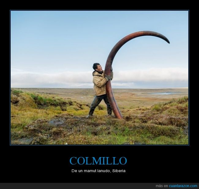 colmillo,gigante,gran animal,increible,lanudo,mamut