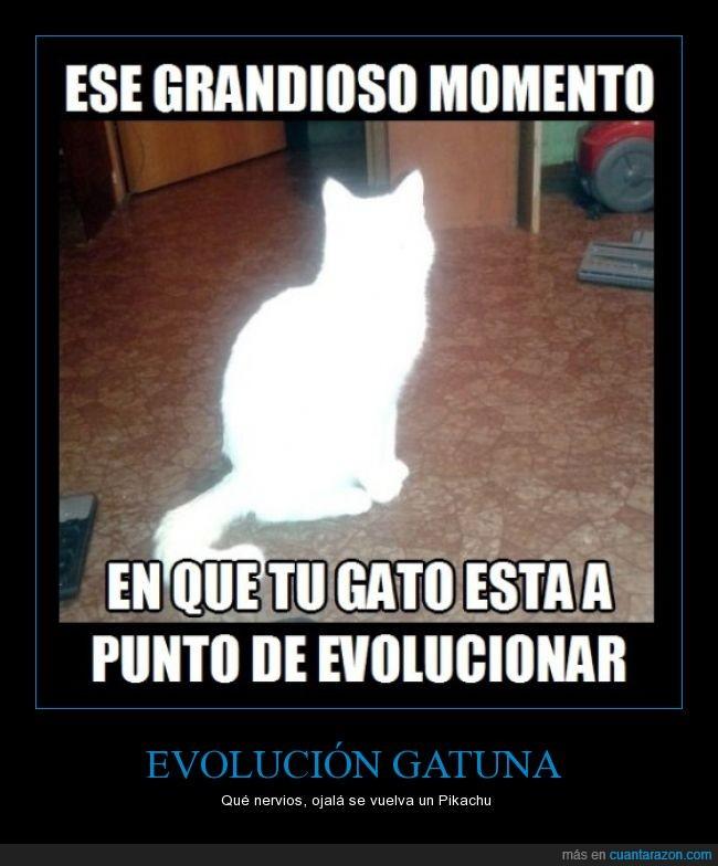 evolución,gato,luz,momento,pokemon