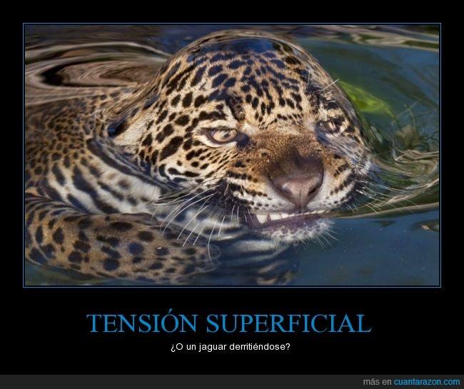 agua,capa,charca,charcho,derretir,derritiéndose,elemento,jaguar,nadar,ria,rio,romper,superficial,tension