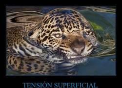 Enlace a TENSIÓN SUPERFICIAL