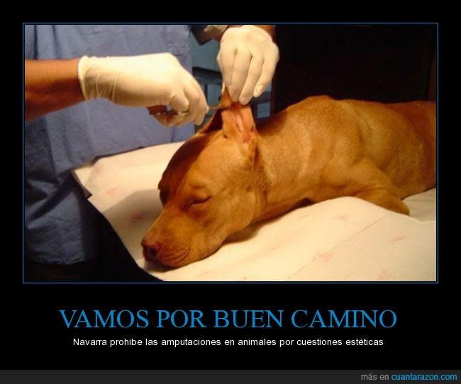 amputación,animales,apariencia,canina,cola,cortar,cuestion,derechos,estetica,ley,mascotas,Navarra,orejas,perros,prohibición,raza