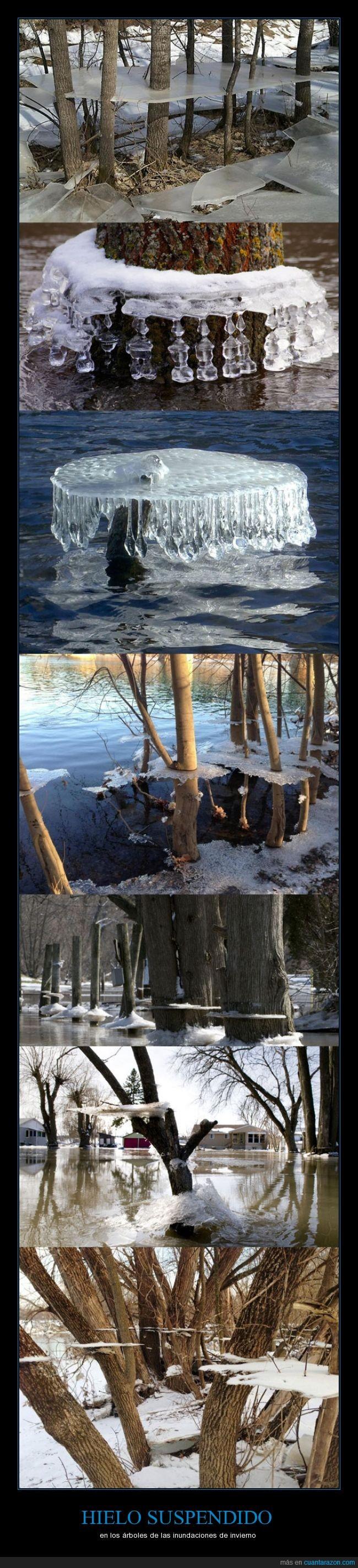 árboles,congelados,deshielo,frío,hielo,inundaciones,invierno,troncos