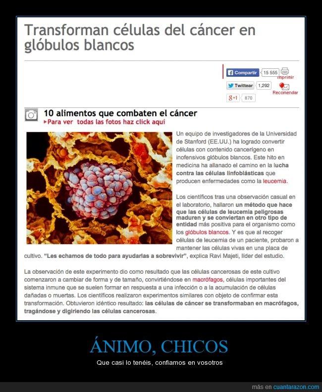 biologia,blanco,cancer,cancerigena,cancerosa,celula,cura,glóbulo,leucocito,medicina