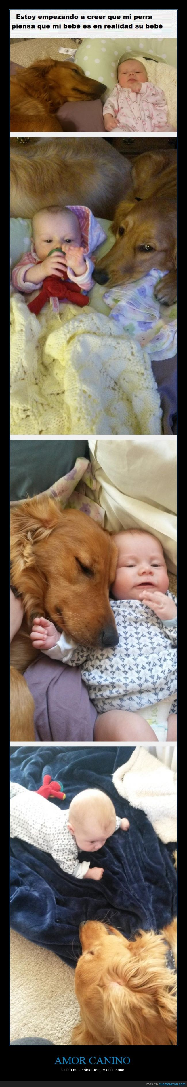 amor,bebe,canino,hijo,niño,perro