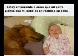 Enlace a AMOR CANINO