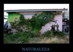 Enlace a NATURALEZA