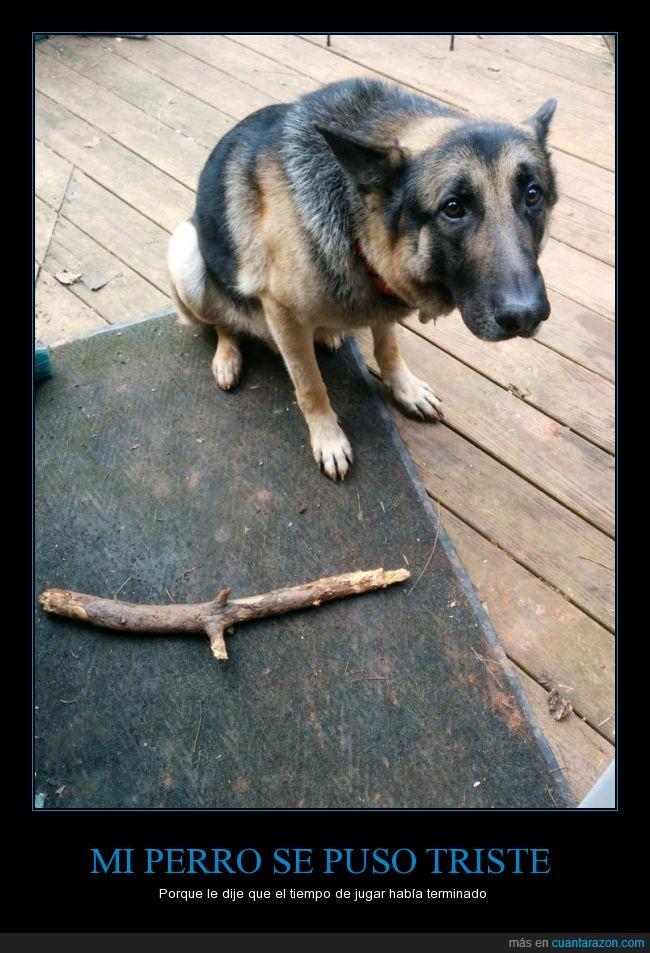 carita,juego,lanzar,palo,perro,quién podría decirle que no,tirar,triste
