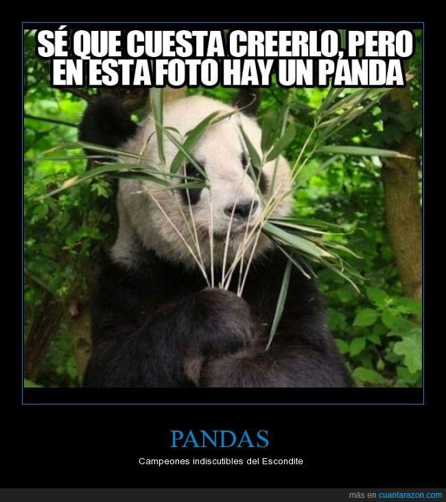 bambu,camuflado,camuflaje,detras,esconder,hoja,oso,panda
