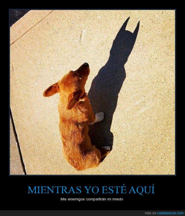 batdog,Batman,el caballero oscuro,héroe,miedo,murciélagos,perro,sombra