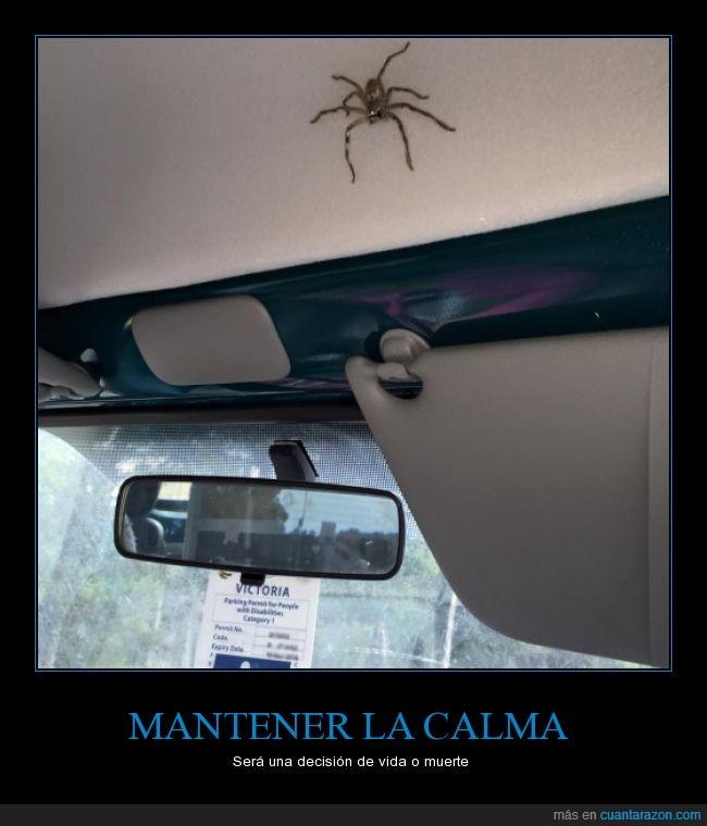 accidente,araña,caos,coche,conducción,mantener la calma,vida o muerte
