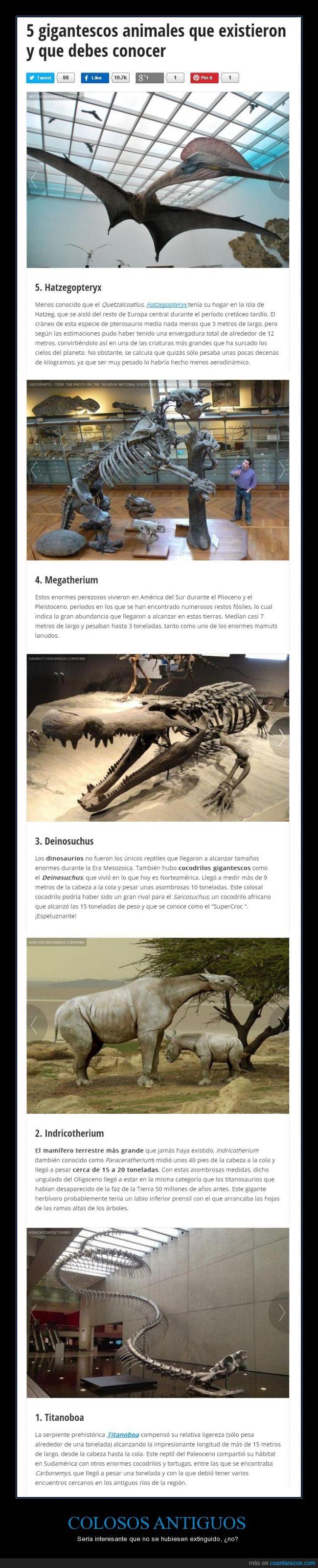 animales gigantes,Colosos,Deinosuchus,no voy a escribir los demás nombres son muy difíciles,prehistóricos,que pasaría si siguieran con vida?,Titanboa