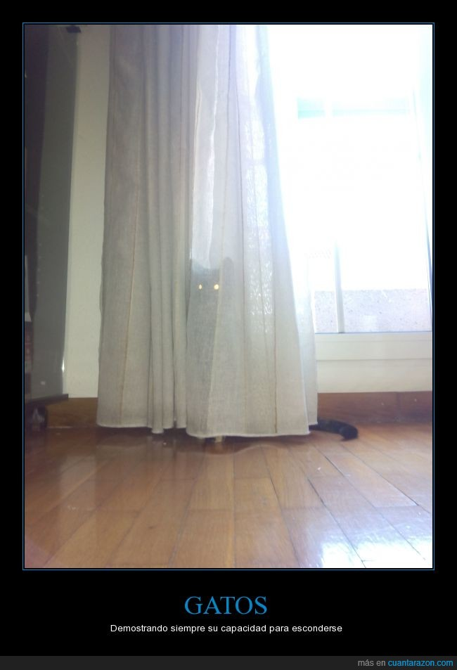 cortina,detras,esconder,escondida,gatos,kira,mi gata,miedo,ojos
