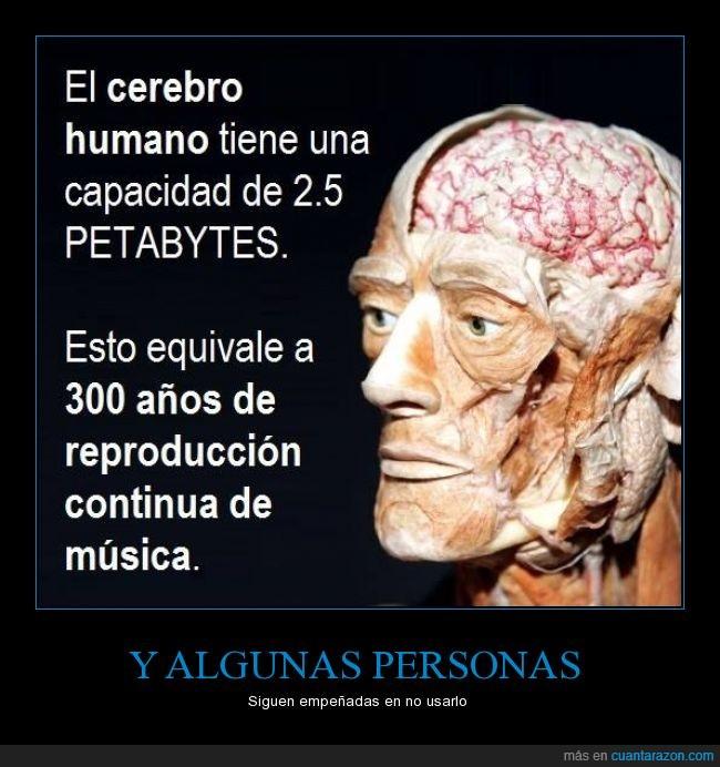 300 años,capacidad,cerebro,equivalente,humano,memoria,musica,petabyte,reproducción