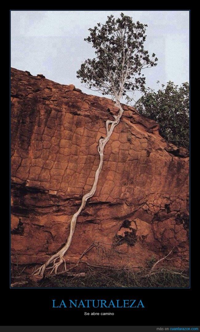 agua,árbol,buscar,crecer,dificultad,raíz,roca,vida