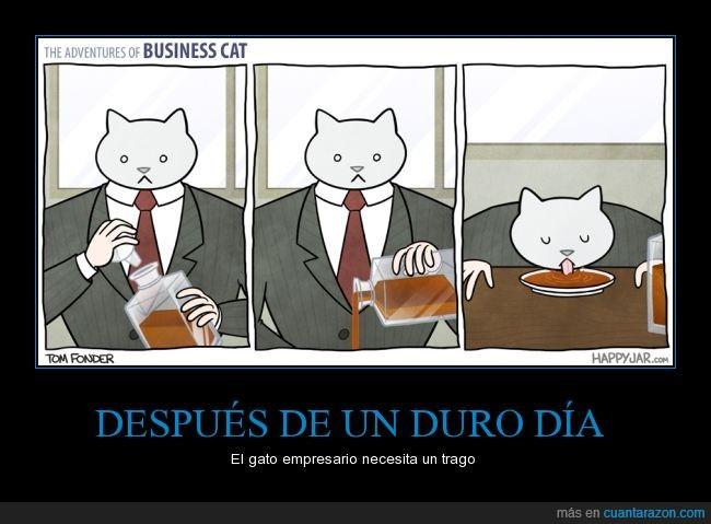baso,beber,comedero,empresa,empresario,gato,plato,servir