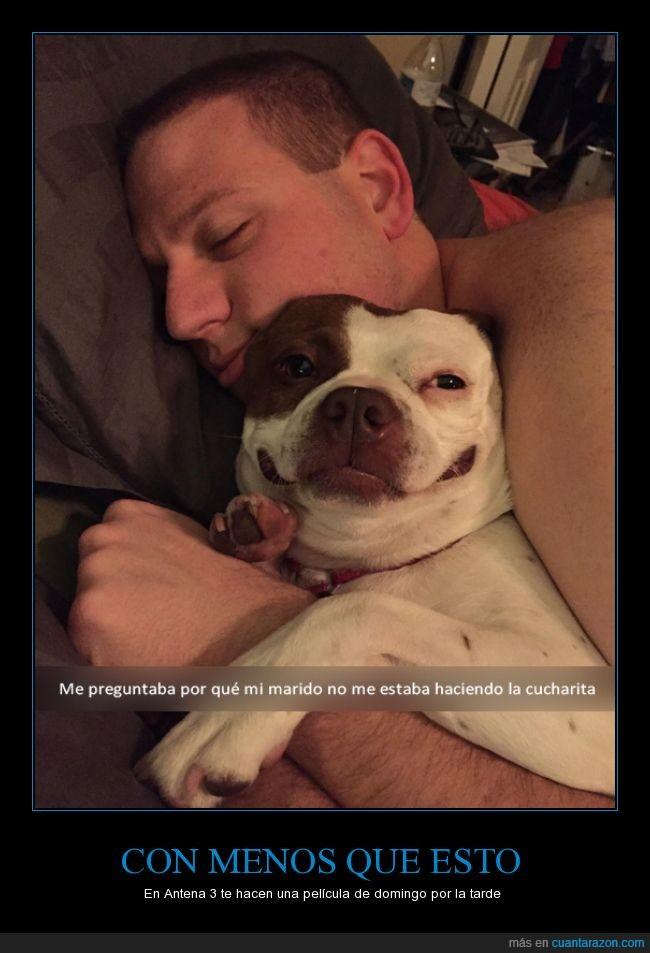 abrazar,abrazo,cucharita,feliz,perro,usurpadora,usurpar
