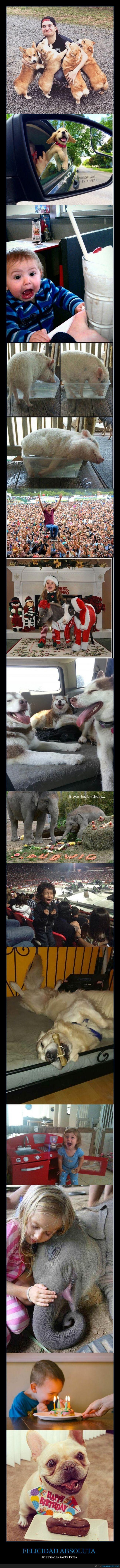 cara,cerdo,contento,elefante,emocion,feliz,ilusión,niña,niño,perro,regalo,sonrisa