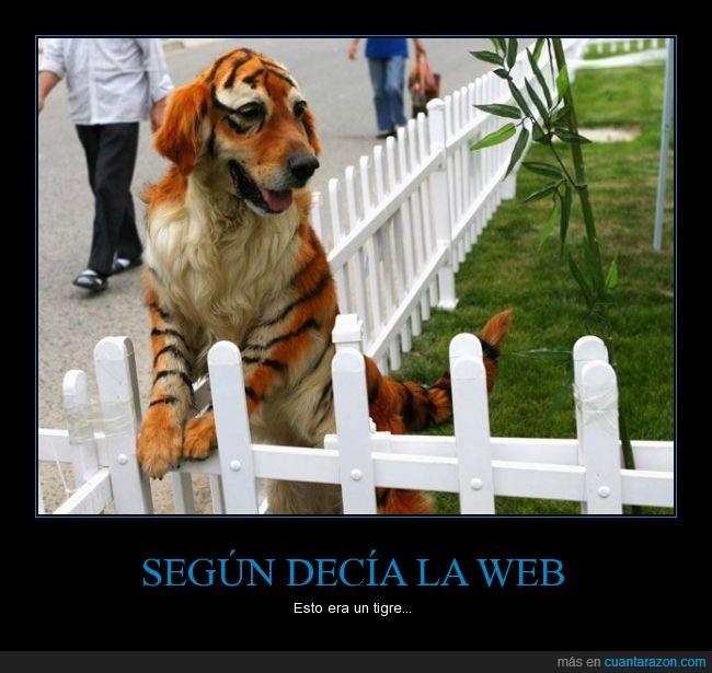 can,Ebay,espectral,perro,pintado,pintura,Tigre