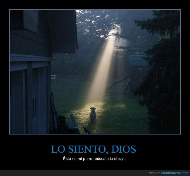 brillo,cielo,dios,elegido,escogido,luz,perro