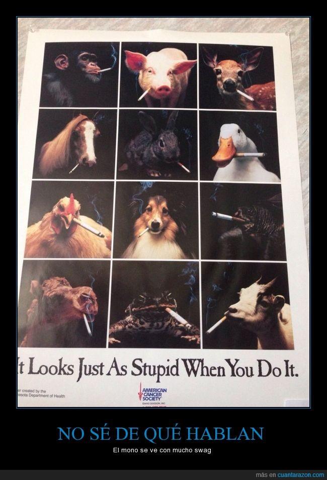 animales,así de estúpido te ves cuando lo haces,campaña anti tabaco,cáncer,fumar,humor,tabaquismo,vicio
