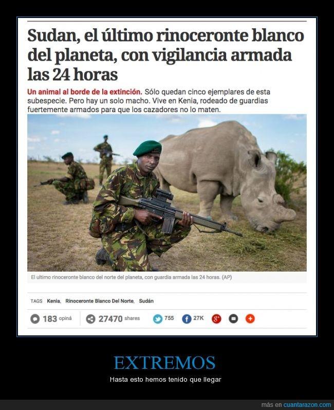 áfrica,animal,avaricia,caza furtiva,especie,extinción,guardias,kenia,protección,rinoceronte,rinoceronte blanco