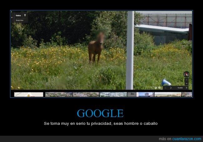 caballo,google,intimidad,maps,ojos,privacidad,tapar