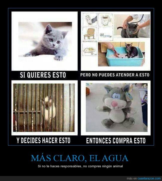 abandonar,adoptar,animal,comprar,cuidar,gato,mascota,peluche