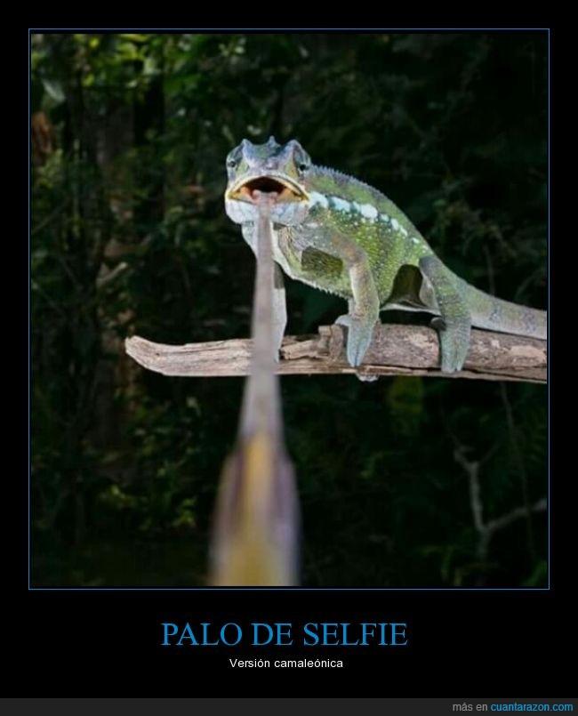 animal,atrapar,camaleón,comer,divineo,foto,lengua,objecto,palo,palo para deficientes mentales,postureo,selfie