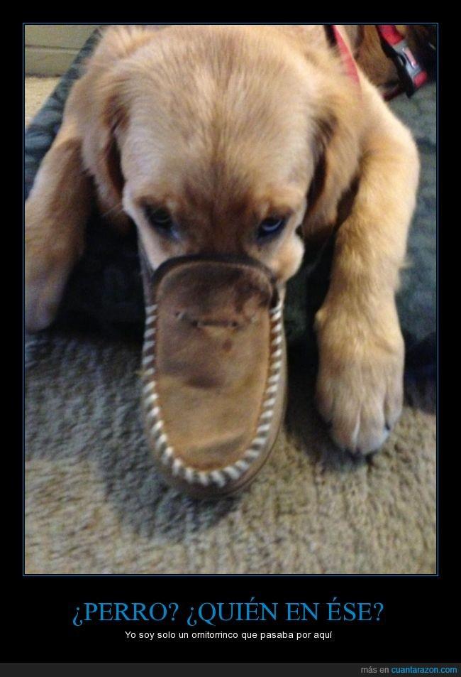 boca,ornitorrinco,perro,pico,zapatilla,zapato