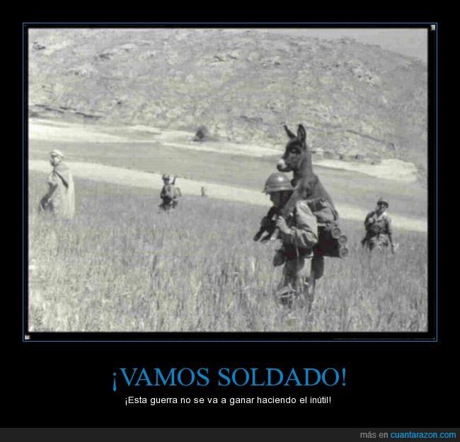 burro,cargar,encima,guerra,llevar,soldado,vintage