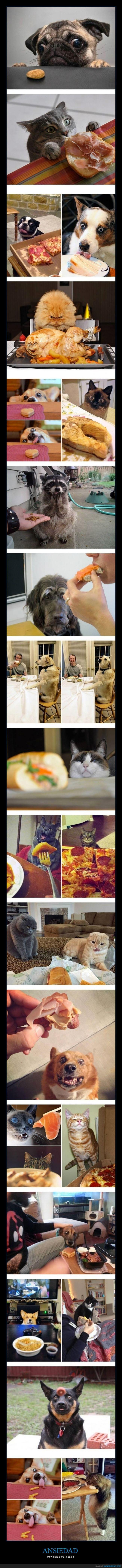ansiedad,comer,comida,deseo,gato,hambre,llegar,mirada,perro,pescado,vago