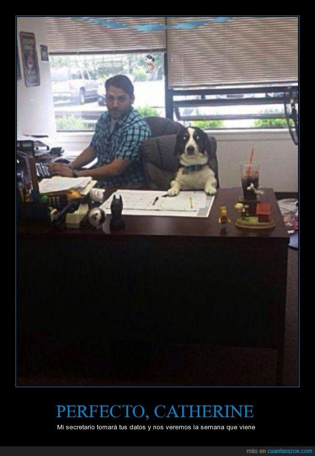 absurdo,Catherine,mesa,oficina,perro,reunion,secretario,semana,trabajar,trabajo,viene