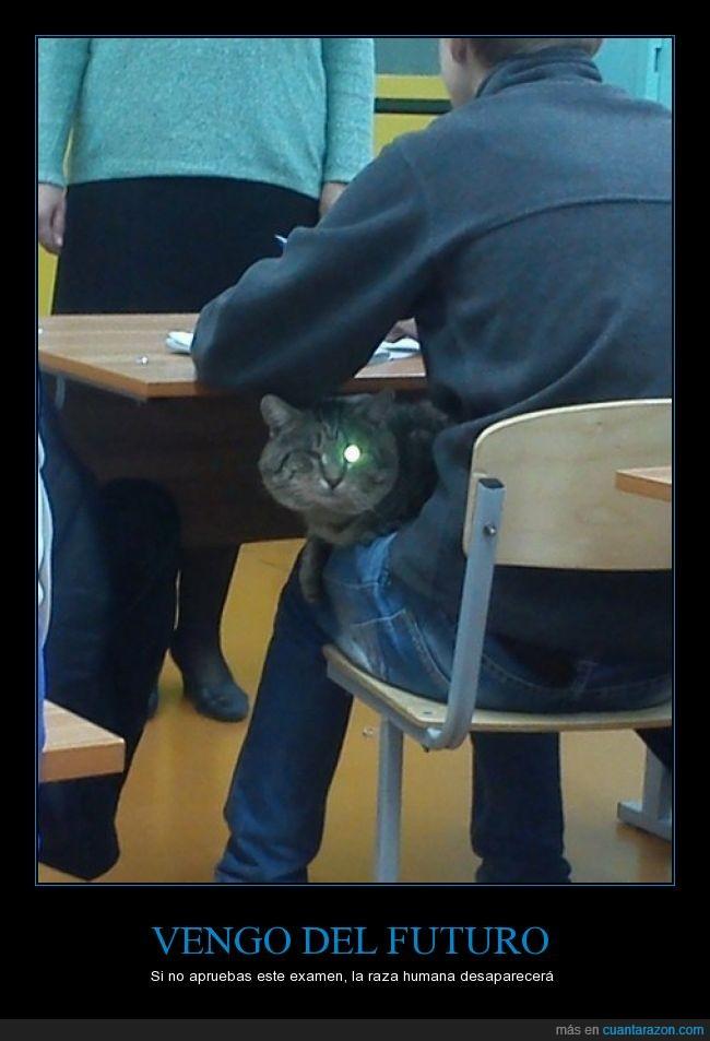 aprobar,escuela,examen,gato,ojo,proteger,terminator