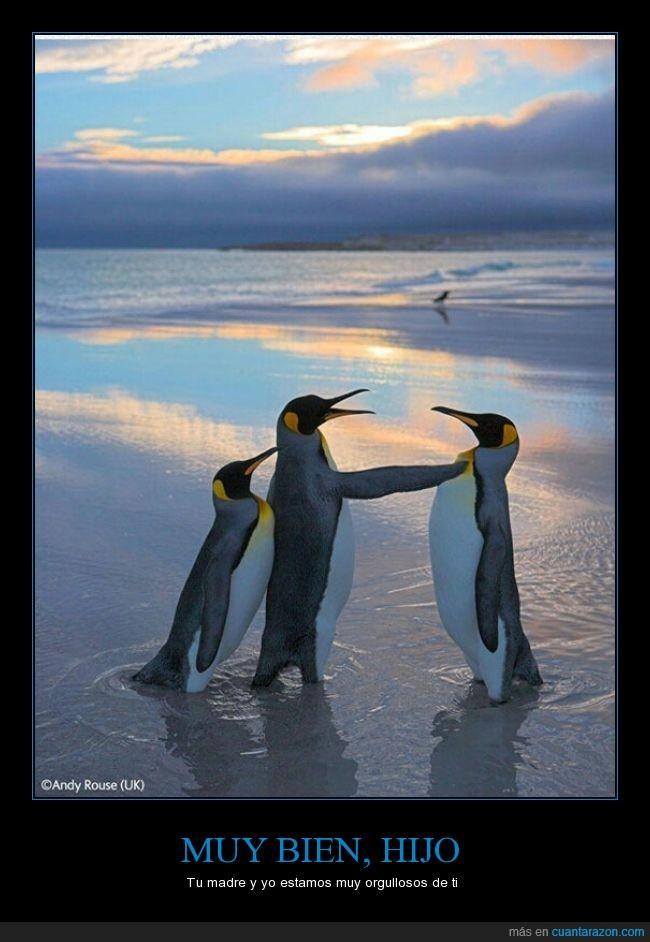 conversacion,fotografía,hijo,orgulloso,padre,pinguinos,trío
